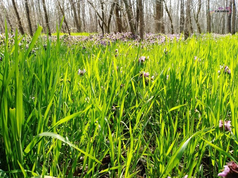 grass-1.jpg